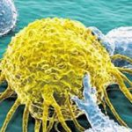 Neuer Krebs-Antikörper