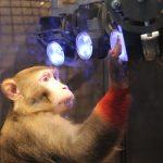 Infobroschüre zur Rolle von Affen in der Forschung