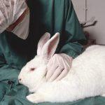 Tiermedizinische Forschung setzt Tierversuche voraus