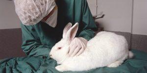 Ein Tierpfleger nimmt einen Gesundheitscheck bei einem weißen Kaninchen vor.