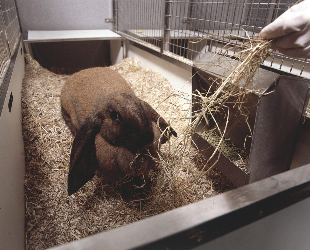 Ein Kaninchen wird gefüttert.