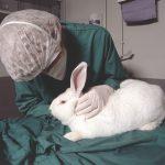 10 Fakten zu Kaninchen