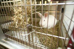Ein weißes Kaninchen sitzt in seinem Käfig im Heu.