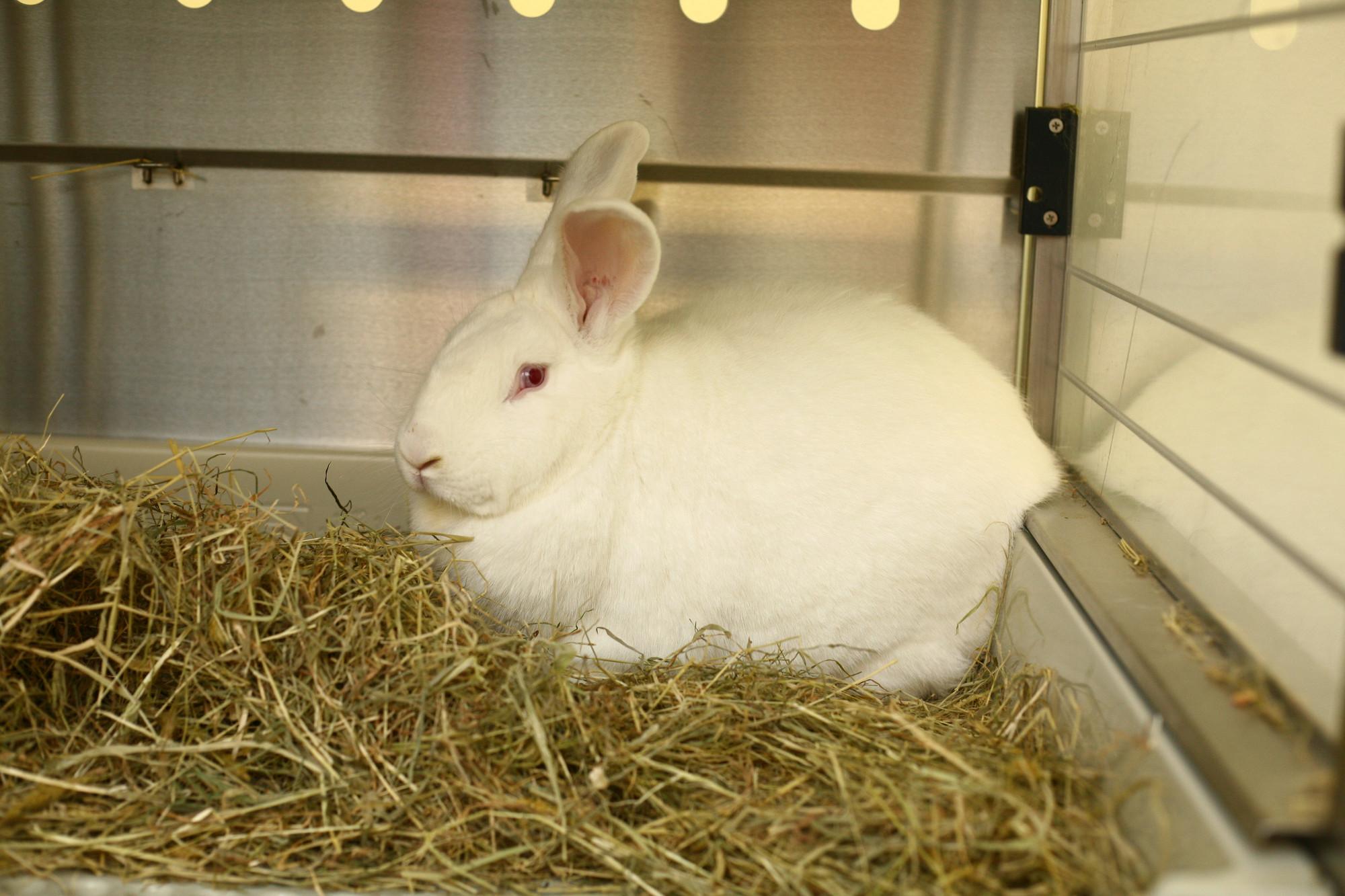 Ein weißes Kaninchen im Käfig.
