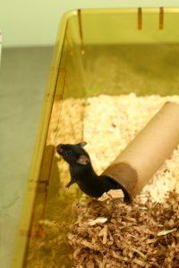 Foto: © Understanding Animal Research