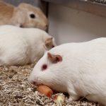 """Testen Sie Ihr Wissen mit dem """"Tierversuche verstehen""""-Quiz!"""