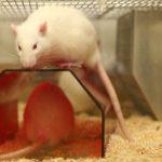 Tierarten und ihr Einsatz in der Forschung