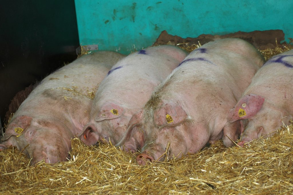 Friedrich-Loeffler-Institut – Bundesforschungsinstitut für Tiergesundheit
