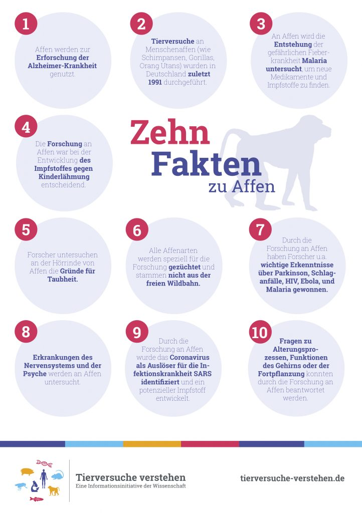 10_fakten_affe