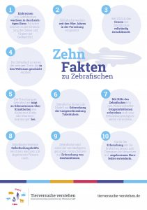 10 Fakten zu Zebrafischen