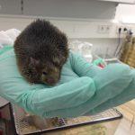 Tierversuche an Mäusen zeigen: Gene beeinflussen Fettlebererkrankung