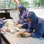 Wächter am Ententeich – wie  Sentinel-Enten beim Aufspüren der Vogelgrippe helfen
