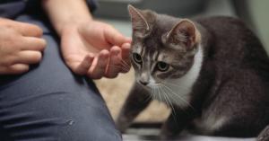Ein Tierpfleger streichelt eine Katze.