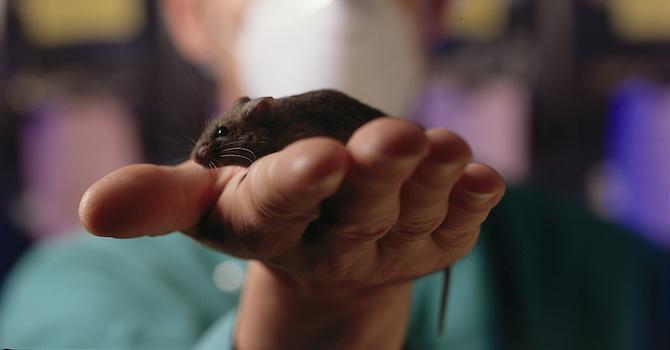Maus auf einer Hand