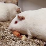 Tierversuche verstehen Quiz