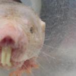 Internationaler Tag des Versuchstiers – Medizinischer Fortschritt dank Tieren