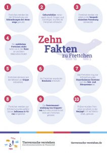 10 Fakten zu Frettchen