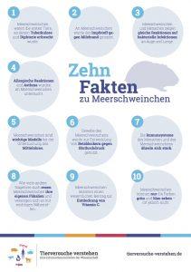 10 Fakten zu Meerschweinchen