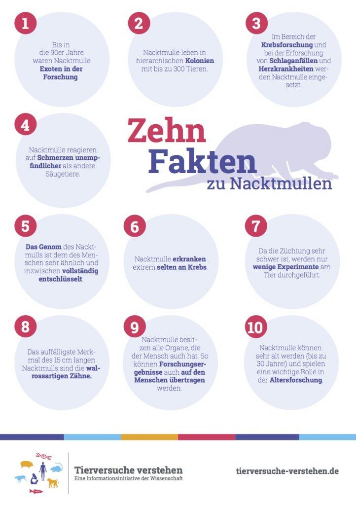 10 Fakten zu Nacktmullen