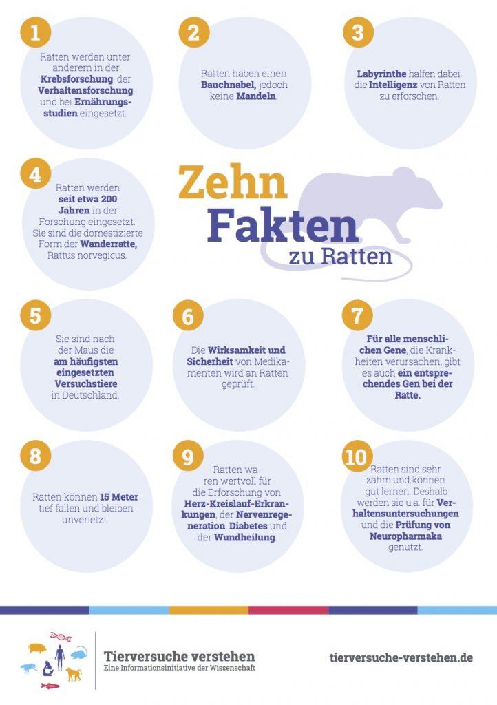 10 Fakten zu Ratten