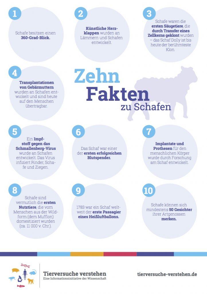 10 Fakten zu Schafen
