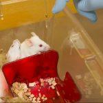 Zahl der Tierversuche gegenüber 2015 leicht gestiegen