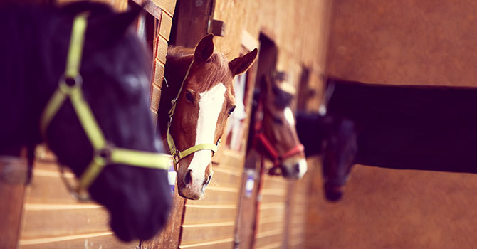 10 Fakten zu Pferden