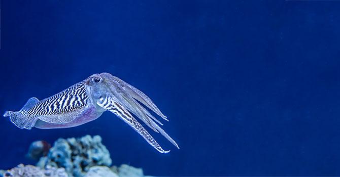 10 Fakten zu Tintenfischen