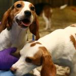 10 Fakten zu Hunden