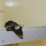 Zufriedene Tiere ermöglichen eine gute Wissenschaft