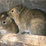 Wie sich das Wohlergehen von Tieren messen lässt