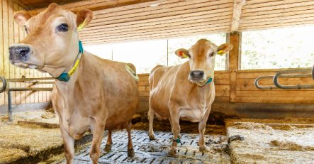 Uni Hohenheim setzt bei Tierversuchen erfolgreich auf Transparenz