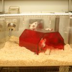Tierschutz und Forschungsqualität gehören zusammen