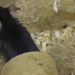 Erstmals Zahlen für nicht-verwendbare Tiere in der Forschung